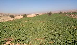مشکل تأمین آب از موانع مهم توسعه کشت محصولات کشاورزی در کرج است/ چاره ای جز بهره وری از آب موجود نداریم